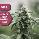 Top 5 Easy-to-Grow Seeds From Zambeza
