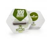 OG Bubble Gum Autoflowering Bulk Seeds
