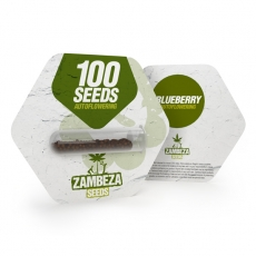 Blueberry Autoflowering Bulk Seeds