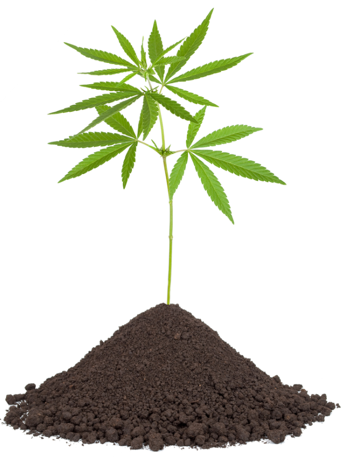 Create the best soil for your marijuana