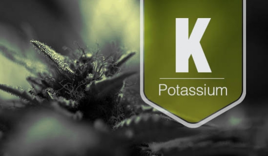 Potassium Deficiency: What it is and How to Get Rid of it