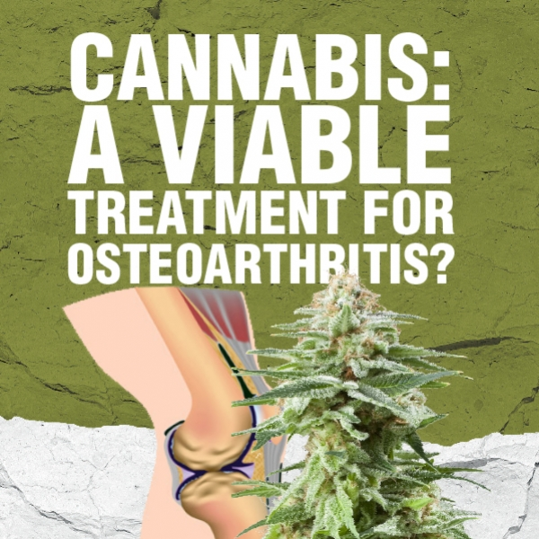 Cannabis: A Viable Treatment For Osteoarthritis?