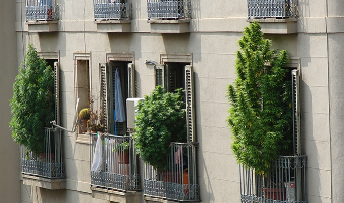 Growing Weed On A Balcony