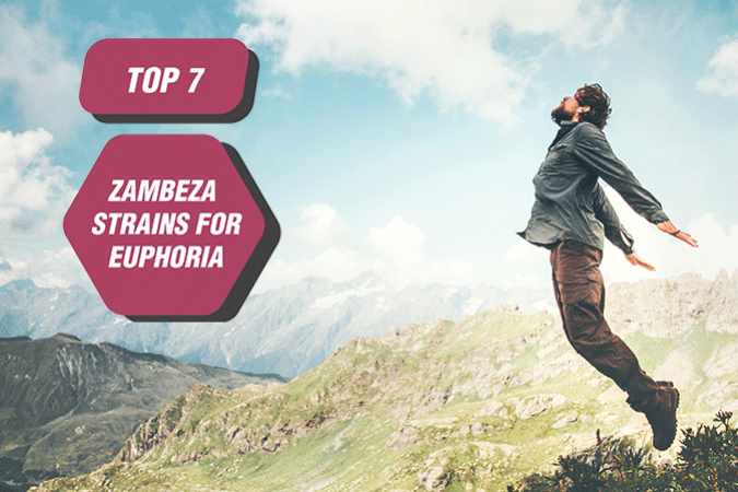 Top 7 Zambeza Strains For Euphoria