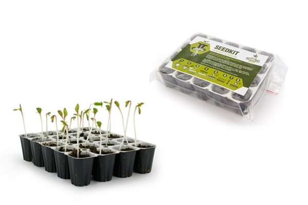 What to do with the Zambeza Seedkit?