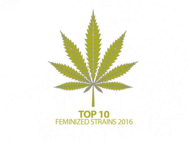 Top 10 Feminized Cannabis Strains Of 2016