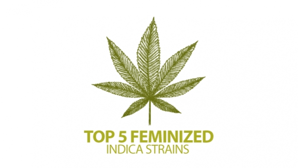 Top 5 Feminized Indica Cannabis Strains