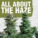 All about the Haze