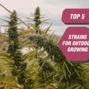 Top 5 Strains for Outdoor Growing