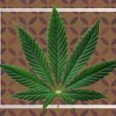What Are Cannabis Fan Leaves?